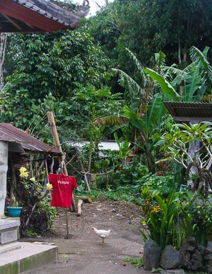 Typical village house Ubud