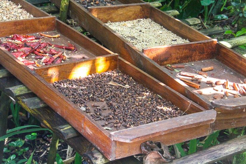coffee tasting Bali