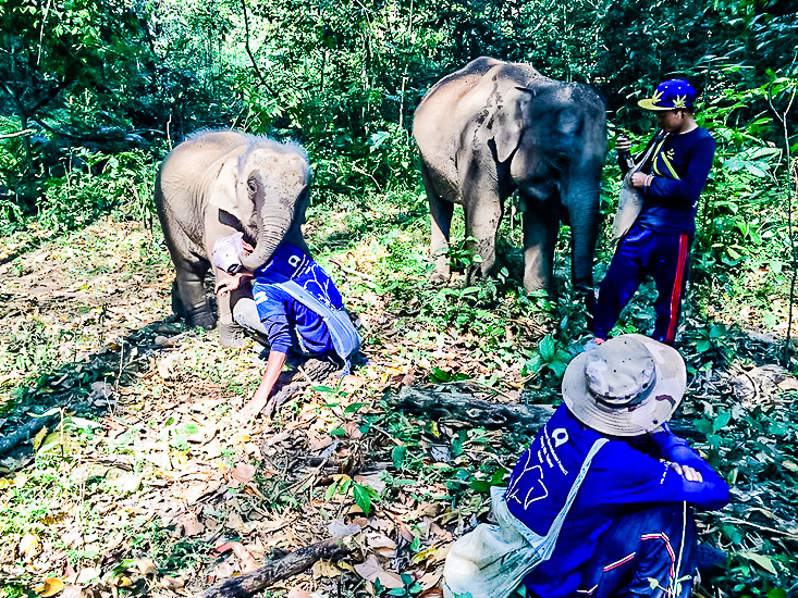 volunteering with elephants Thailand