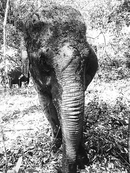Ethical Elephant Encounter Thailand