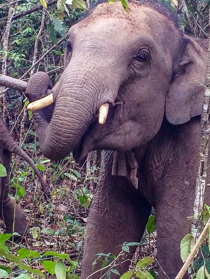 Ethical Elephant Sanctuary Thailand