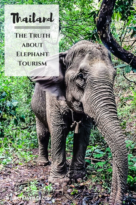 How to Find an Ethical Elephant Sanctuary in Thailand | From an Expert. | Ethical Tourism | Elephant Riding | Elephant Conservation | Ethical Elephant Tourism Thailand | Volunteer with Elephants | How to Have an Ethical Elephant Encounter | Thailand Elephants | Why you Shouldn't Ride an Elephant | #hugthailand #Thaielephants #ethicaltourism #ecotourism #chiangmai #thailand