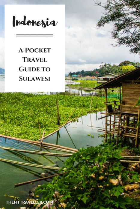 Things to do in Sulawesi Indonesia. What makes sulawesi diving and snorkelling world class and where to find the best diving in Sulawesi. Where to go in Sulawesi and what you need to know before you visit Sulawesi Indonesia. #indonesia #traveltips #sulawesi #diving