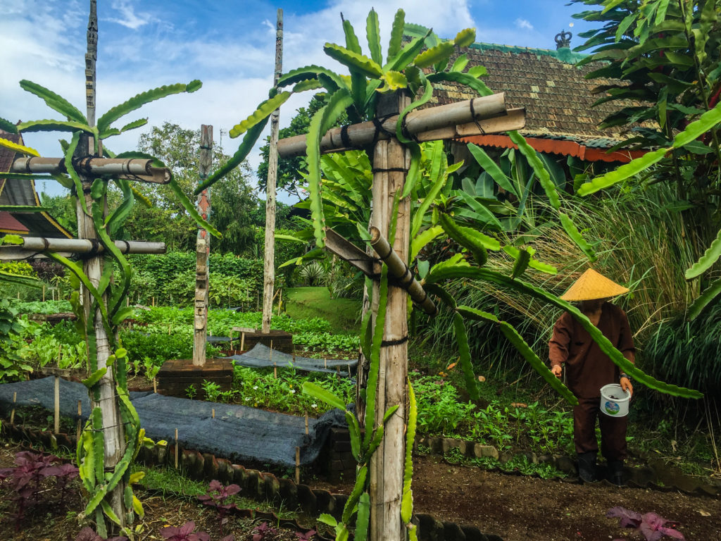desa seni village resort