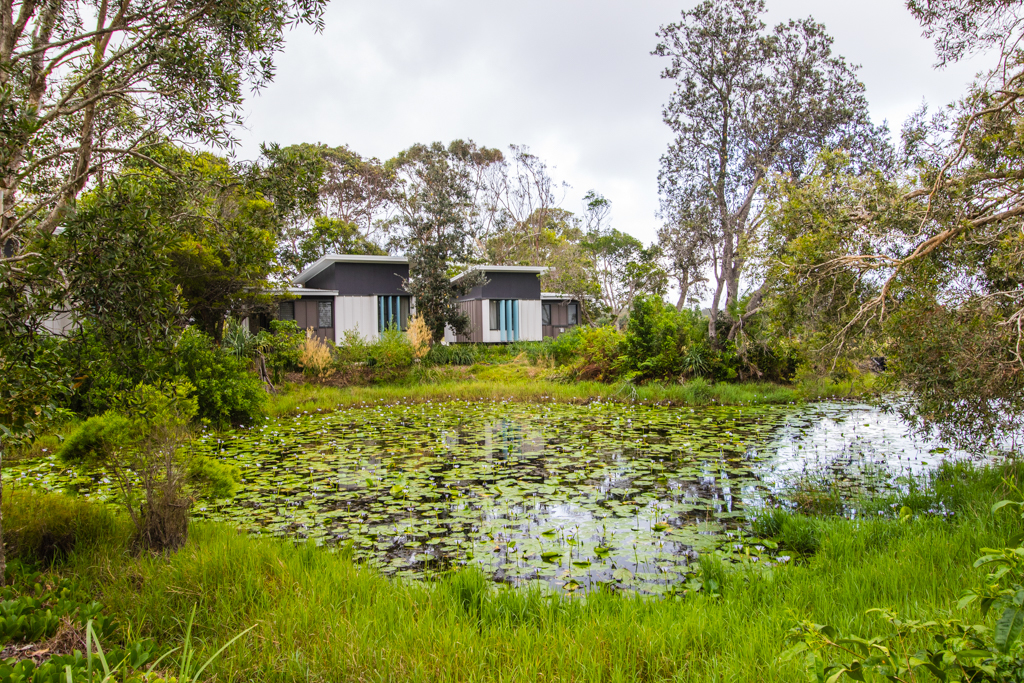 Villas nestle into the natural environment by the pond at Elements of Byron. Image ©Skye Gilkeson