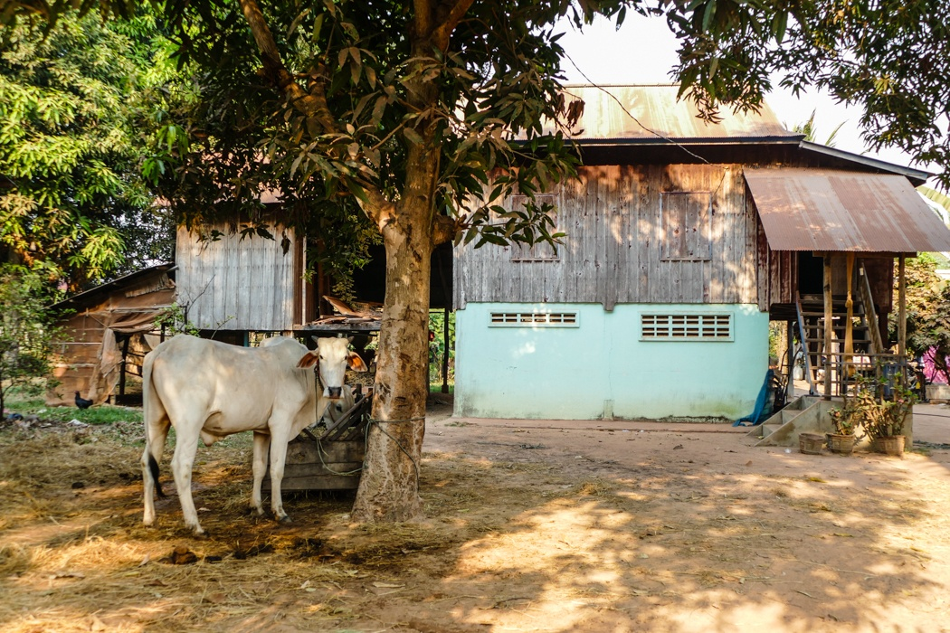 yoga retreat Siem Reap Cambodia