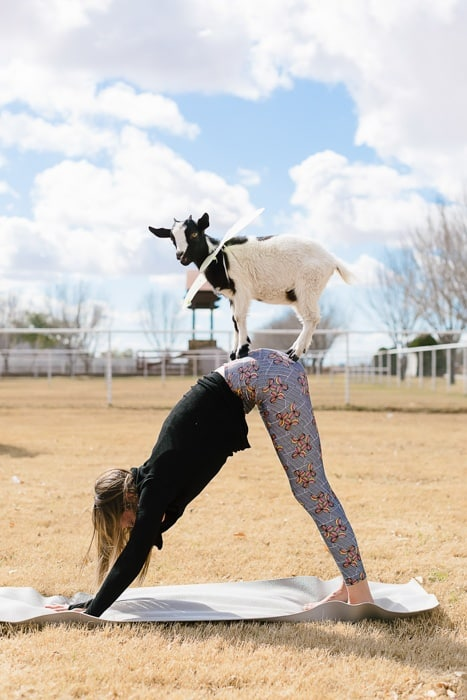 arizona goat yoga